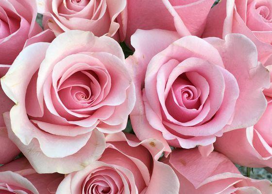 anna-rose-560